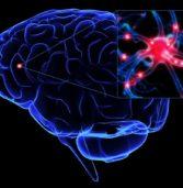 """Il cervello cresce in appena un'ora, basta """"allenarlo""""."""