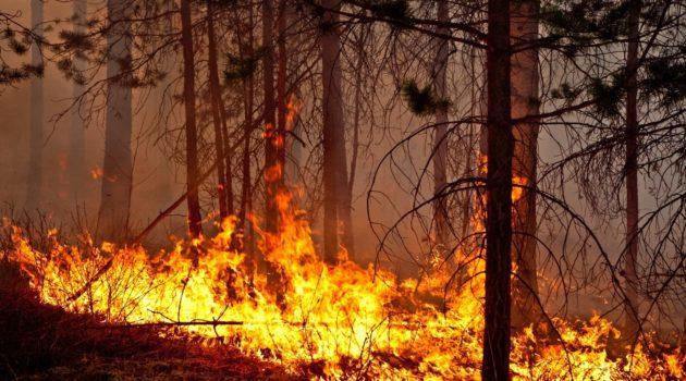 L'INGV controlla le aree bruciate di Castel Fusano dal satellite