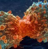 I tumori e i nuovi meccanismi di resistenza