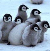 Greenpeace per la più grande area protetta del pianeta nell'Oceano Antartico