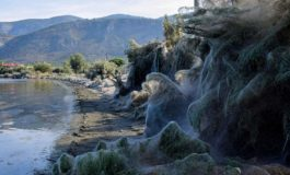 Una gigantesca ragnatela copre più di 300m di costa in Grecia