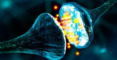 Nuovo meccanismo per la nascita delle sinapsi