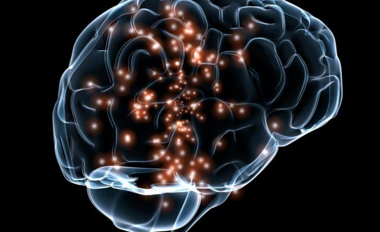 Mappe sensoriali nel cervello dalla codifica degli odori