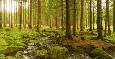 Le foreste assorbono più carbonio nei climi caldi