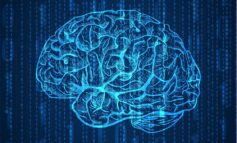 I probiotici aiutano a proteggere e migliorare le funzioni cerebrali