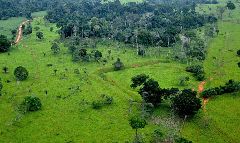 Amazzonia: persa un'area di foresta equivalente a 1,4 milioni di campi di calcio