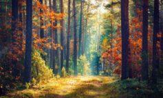 Giornata mondiale delle foreste