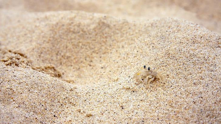 La sorprendente biodiversità faunistica della sabbia delle spiagge